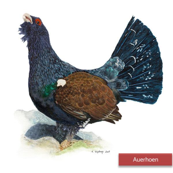 Kateleen Vrijdags Wildlife artist schilderij Auerhoen