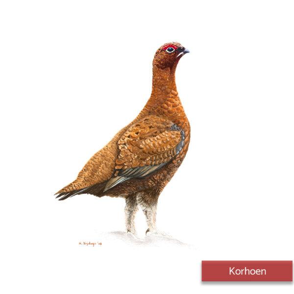 Kateleen Vrijdags Wildlife artist schilderij Korhoen